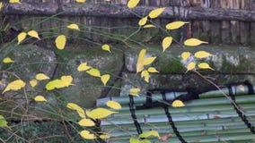 διαθέσιμο διάνυσμα δέντρων απεικόνισης φθινοπώρου απόθεμα βίντεο