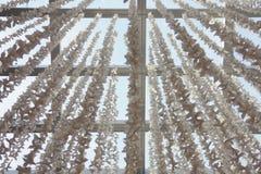 διακοσμήσεις πεταλούδων εγγράφου για το εσωτερικό, υπόβαθρο Στοκ φωτογραφία με δικαίωμα ελεύθερης χρήσης