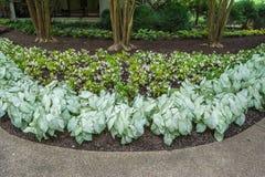 διακοσμητικά φυτά Στοκ Εικόνες