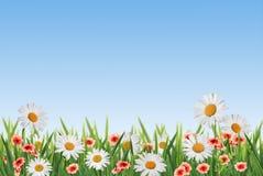 διακοσμητικός floral ανασκόπησης Στοκ Εικόνα