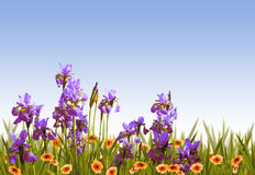 διακοσμητικός floral ανασκόπησης Στοκ Φωτογραφία