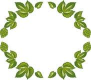 Διακοσμητικό πλαίσιο των πράσινων φύλλων και των κώνων λυκίσκου Στοκ Εικόνες