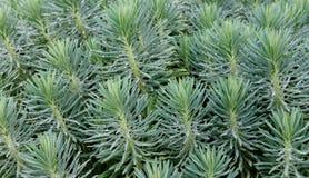 διακοσμητικό φυτό Στοκ εικόνα με δικαίωμα ελεύθερης χρήσης