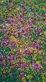 διακόσμηση πετάλων λουλουδιών Στοκ εικόνες με δικαίωμα ελεύθερης χρήσης