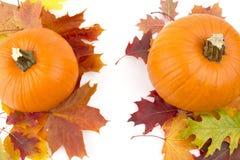 Διακόσμηση των κολοκυθών με τα φύλλα φθινοπώρου για την ημέρα των ευχαριστιών στο λευκό Στοκ Εικόνα