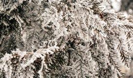 διακλαδίζεται hoarfrost Στοκ Φωτογραφία