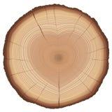 Διαμορφωμένο σύμβολο αγάπης φύσης ετήσιων δαχτυλιδιών καρδιά Στοκ Εικόνες