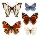 Διανυσματικά εικονίδια πεταλούδων Στοκ φωτογραφίες με δικαίωμα ελεύθερης χρήσης