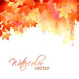 Διανυσματικά φύλλα πτώσης Watercolor φθινοπώρου Στοκ φωτογραφία με δικαίωμα ελεύθερης χρήσης