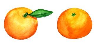 2 διανυσματικά tangerines watercolor που απομονώνονται στο λευκό Στοκ Φωτογραφίες