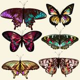 Διανυσματικές ρεαλιστικές πεταλούδες για το σχέδιο Στοκ Εικόνες