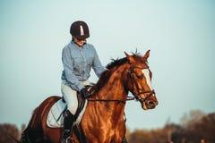 διανυσματικές δυτικές άγρια περιοχές σειράς ιππασίας κοριτσιών σχεδίων Στοκ Φωτογραφίες