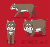 Διανυσματική απεικόνιση κινούμενων σχεδίων Bobcat Στοκ φωτογραφία με δικαίωμα ελεύθερης χρήσης