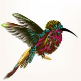 Διανυσματική απεικόνιση με το ρεαλιστικό βουίζοντας πουλί για το σχέδιο Στοκ Φωτογραφία