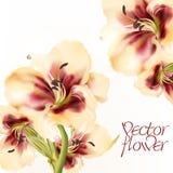Διανυσματική απεικόνιση με το ρεαλιστικό λουλούδι κρίνων Στοκ Εικόνα