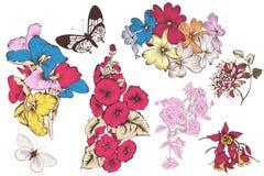 Διανυσματική συλλογή των λεπτομερών διανυσματικών λουλουδιών για το σχέδιο Στοκ Εικόνες