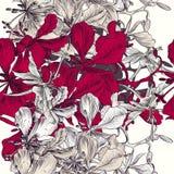 Διανυσματικό άνευ ραφής σχέδιο για το σχέδιο ταπετσαριών με τα λουλούδια Στοκ Εικόνες