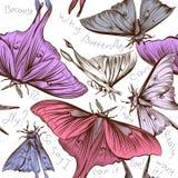 Διανυσματικό άνευ ραφής σχέδιο ταπετσαριών με τις πεταλούδες στροβίλου για τα des Στοκ Εικόνες