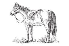Διανυσματικό άλογο με τη σέλα και το χαλινάρι Στοκ εικόνα με δικαίωμα ελεύθερης χρήσης