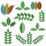 Διανυσματικό σύνολο πράσινων φύλλων Στοκ Εικόνες