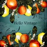 Διανυσματικό σύνολο ρεαλιστικών πορτοκαλιών με τα λουλούδια για το σχέδιο Στοκ φωτογραφίες με δικαίωμα ελεύθερης χρήσης