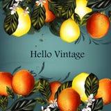 Διανυσματικό σύνολο ρεαλιστικών πορτοκαλιών με τα λουλούδια για το σχέδιο Στοκ Εικόνες