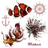 Διανυσματικό σύνολο συρμένων χέρι ψαριών στο ύφος watercolor Στοκ εικόνα με δικαίωμα ελεύθερης χρήσης