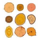 Διανυσματικό σύνολο φετών δέντρων ξύλινο Στοκ Εικόνα