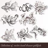 Διανυσματικό σύνολο filigree που σύρεται goldfish στο εκλεκτής ποιότητας ύφος Στοκ Εικόνες