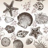 Διανυσματικό υπόβαθρο με τα κοχύλια θάλασσας στο χαραγμένο ύφος Στοκ Εικόνες