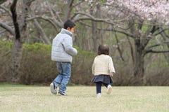 Ιαπωνικά άνθη αδελφών και αδελφών και κερασιών Στοκ φωτογραφίες με δικαίωμα ελεύθερης χρήσης