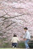 Ιαπωνικά άνθη αδελφών και αδελφών και κερασιών Στοκ εικόνες με δικαίωμα ελεύθερης χρήσης