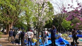 Ιαπωνικά που συλλέγουν κάτω από τα ανθίζοντας δέντρα στην άνοιξη, Τόκιο, Ιαπωνία απόθεμα βίντεο