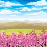 ιαπωνικά ρόδινα δέντρα βου&n Διανυσματική απεικόνιση