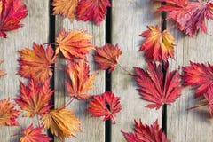 Ιαπωνικά φύλλα δέντρων σφενδάμνου στην ξύλινη γέφυρα στοκ εικόνα