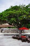 Ιαπωνική κόκκινη ομπρέλα κάτω από το μεγάλο δέντρο στοκ εικόνες