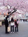 Ιαπωνική οικογένεια που απολαμβάνει τα άνθη κερασιών Στοκ φωτογραφία με δικαίωμα ελεύθερης χρήσης