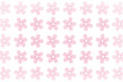 Ιαπωνική περίληψη σχεδίων ανθών κερασιών στο άσπρο υπόβαθρο Στοκ Εικόνα