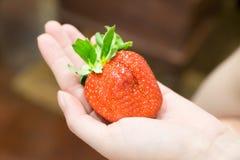 Ιαπωνική φράουλα σε διαθεσιμότητα Στοκ εικόνα με δικαίωμα ελεύθερης χρήσης