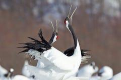 Ιαπωνικοί γερανοί Στοκ εικόνα με δικαίωμα ελεύθερης χρήσης