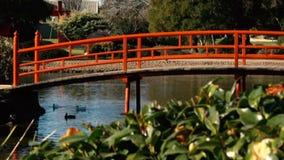 Ιαπωνικοί κήποι σε Toowoomba απόθεμα βίντεο