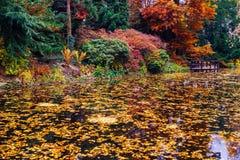 Ιαπωνικός κήπος με τη λίμνη Στοκ εικόνα με δικαίωμα ελεύθερης χρήσης