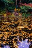 Ιαπωνικός κήπος με τη λίμνη Στοκ Εικόνα