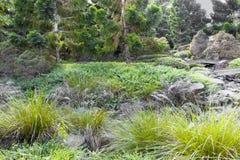Ιαπωνικός κήπος στο πάρκο Ίπσουιτς βασίλισσας ` s στοκ φωτογραφία