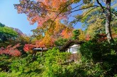 Ιαπωνικός κήπος φθινοπώρου με το σφένδαμνο Στοκ φωτογραφία με δικαίωμα ελεύθερης χρήσης