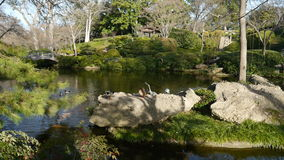 Ιαπωνικός κήπος Στοκ εικόνα με δικαίωμα ελεύθερης χρήσης
