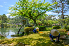 Ιαπωνικός κηπουρός σε Kanazawa, Ιαπωνία Στοκ φωτογραφία με δικαίωμα ελεύθερης χρήσης