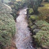 ιαπωνικός παραδοσιακός κήπων Στοκ Εικόνα