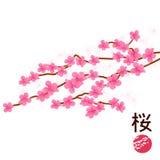 Ιαπωνικό άνθος κερασιών Στοκ Εικόνες