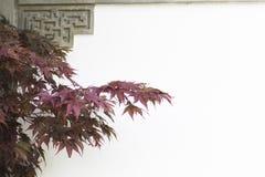 ιαπωνικό δέντρο σφενδάμνου Στοκ Εικόνες